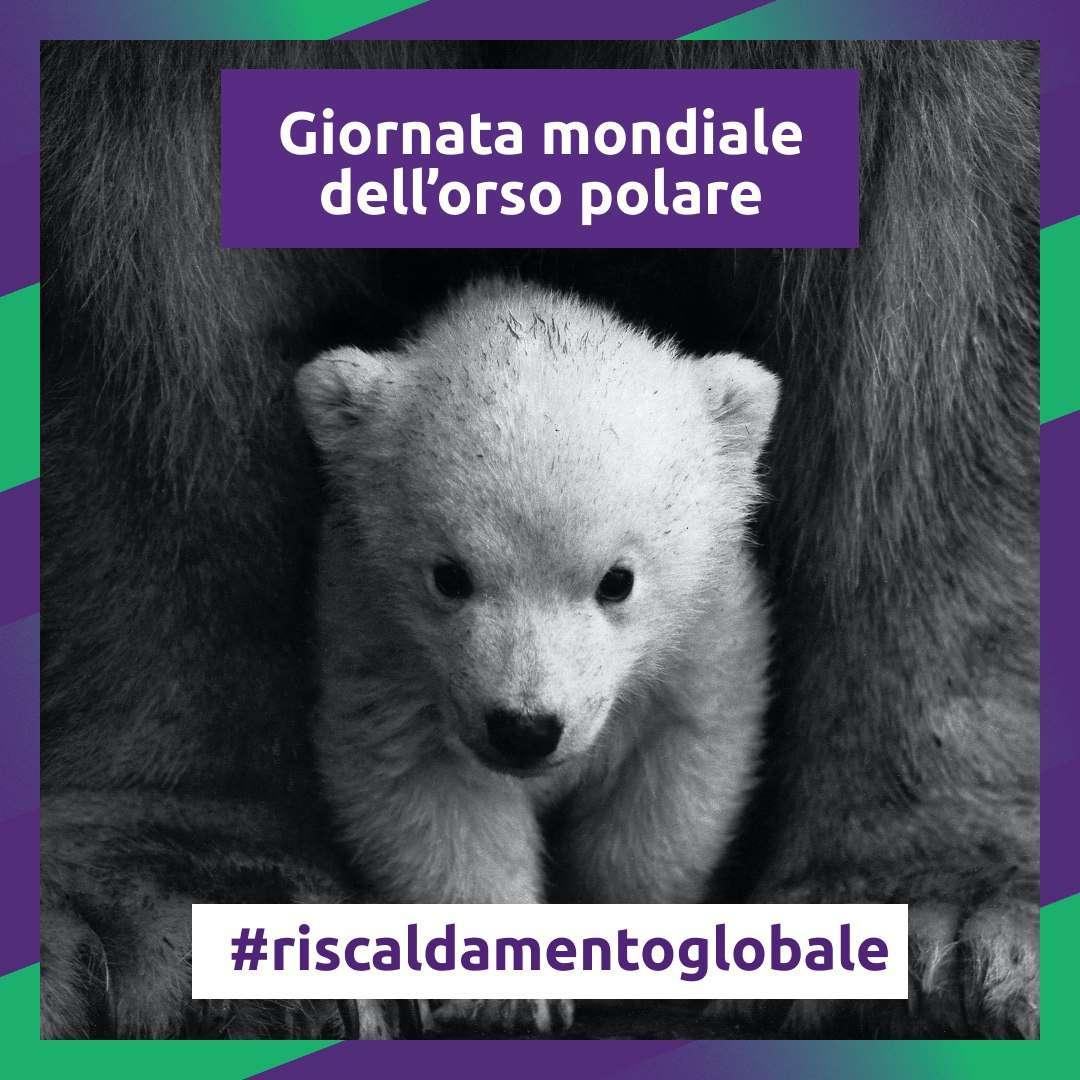 giornata internazionale orso polare